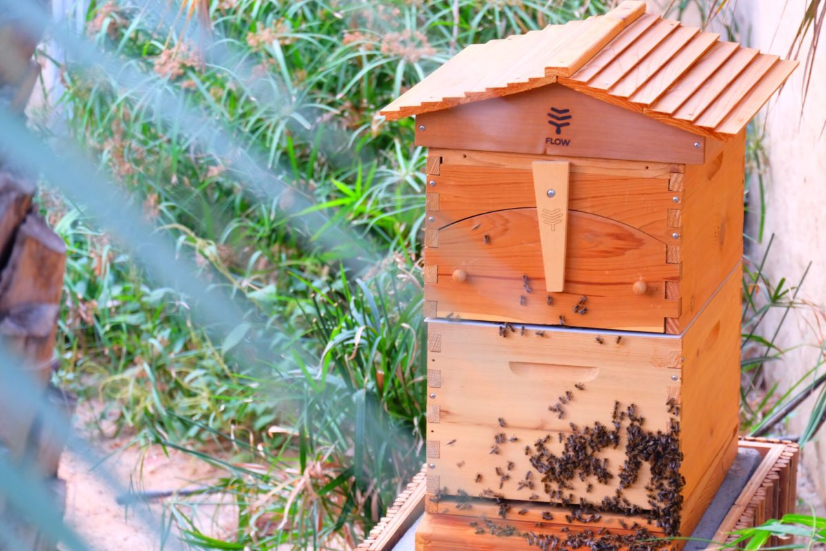 Six Senses Bee farm - Eat with Six Senses Zighy Bay