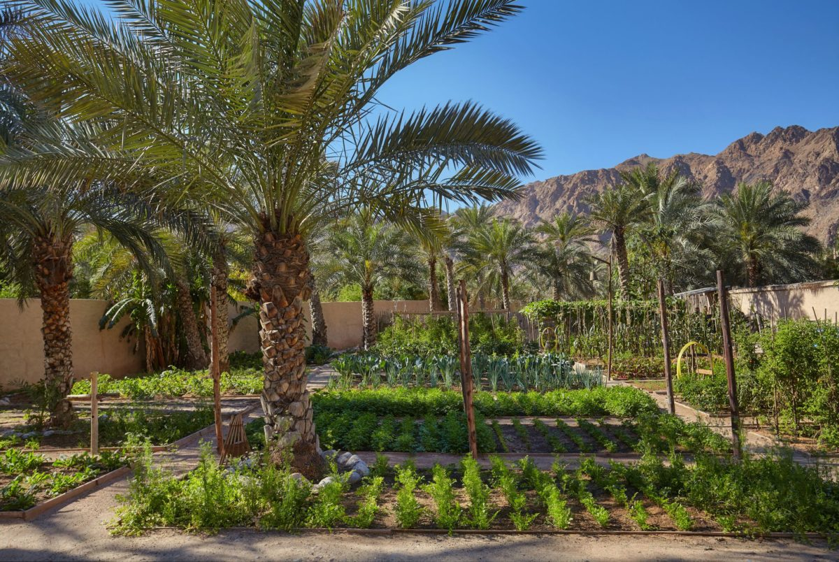 Organic_Garden - Eat with Six Senses Zighy Bay