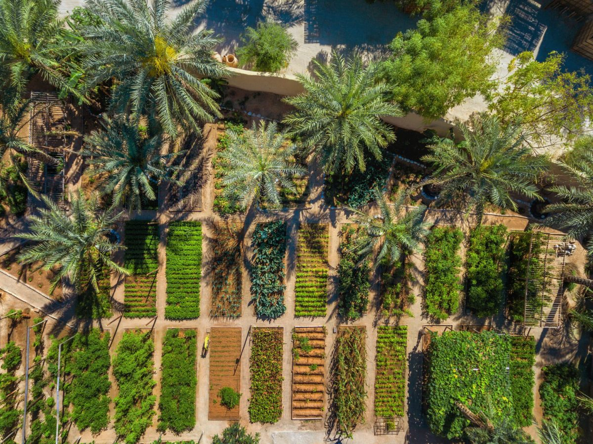 Organic_Garden_aerial - Eat with Six Senses Zighy Bay