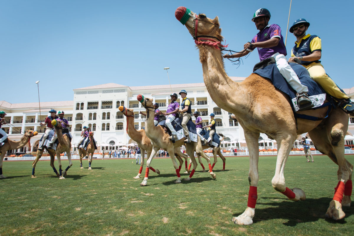 Cavalary V Guards Camel Polo | British Polo Day